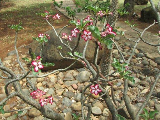 Thornybush Waterside Lodge : fiori