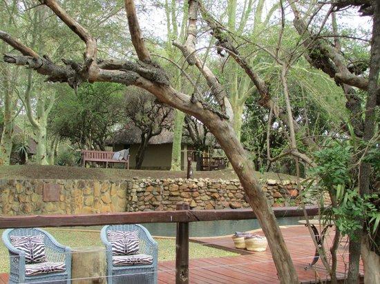 Thornybush Waterside Lodge : lodge