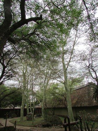 Thornybush Waterside Lodge : natura