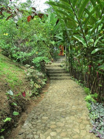 Dolphin Bay Hideaway: Path way to the hotel