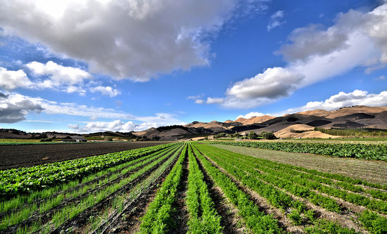 Arroyo Grande, Kalifornia: Talley Farms Vineyard