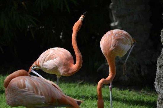 Tisch Family Zoological Gardens (Biblical Zoo): flamencos