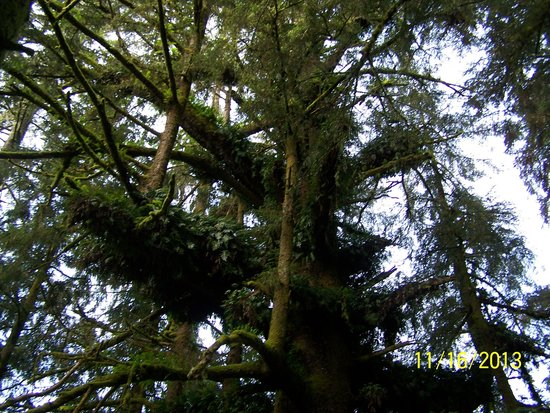 Trees of Mystery: Family tree.