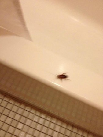 The Frenchmen Hotel: Close up of the water bug in our bathroom