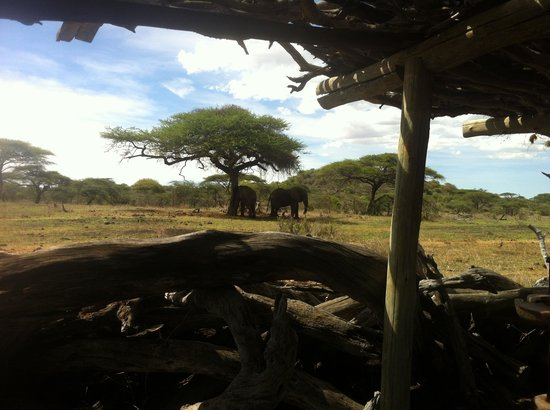 Great Plains Conservation ol Donyo Lodge : You get very close to the elephants