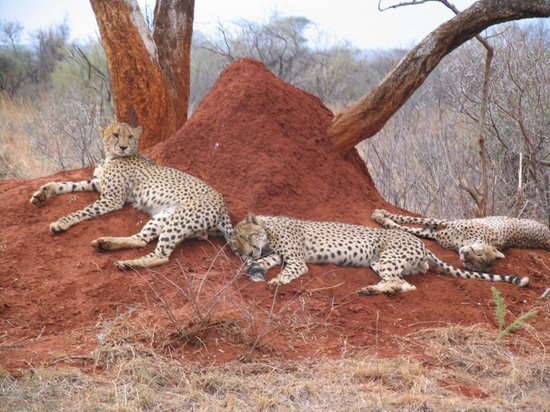 Rhulani Safari Lodge: Animales de la reserva