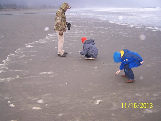 Crescent Beach Motel: Finding sand dollars.