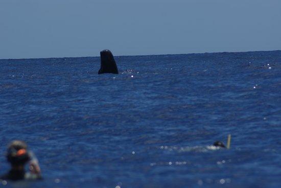 Moorea Boat Tours : i beluga