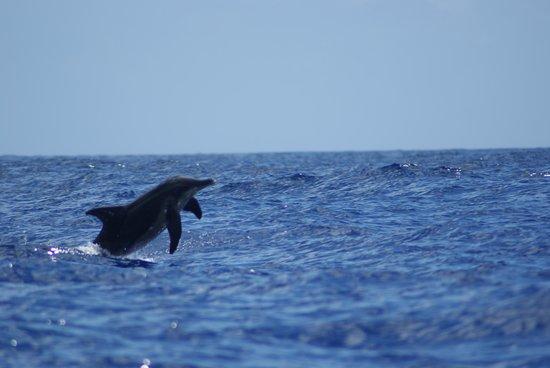 Moorea Boat Tours : i delfini