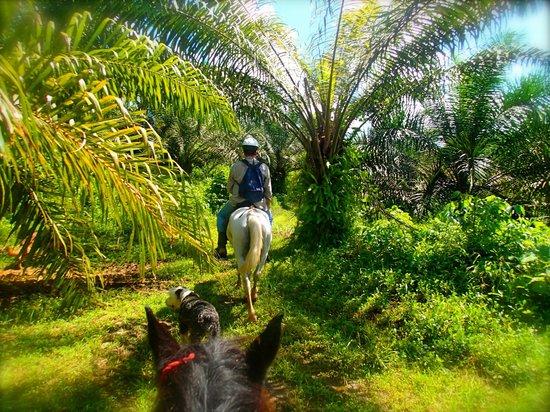 Horse back riding tour at Selva Bananito Lodge