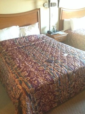 Econo Lodge Inn & Suites : beds