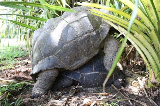 New Emerald Cove: voyage de noces des tortues de l'hôtel
