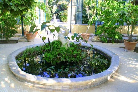 Fontana con fiori acquatici foto di orto botanico di for Fiori acquatici
