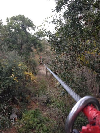 Tallahassee Museum: Last zipline of the course