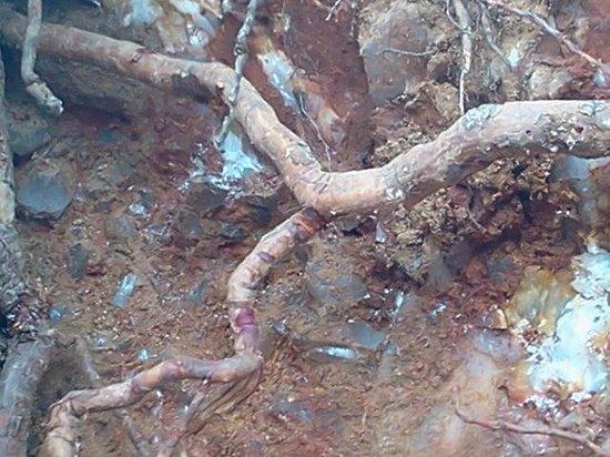 Digging near a crystal vein - Picture of Wegner Quartz