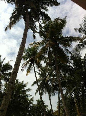Keratheeram Beach Resort: Tree view from the balcony