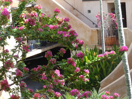 Villa San Michele: Flowering bougainvillea out our windo