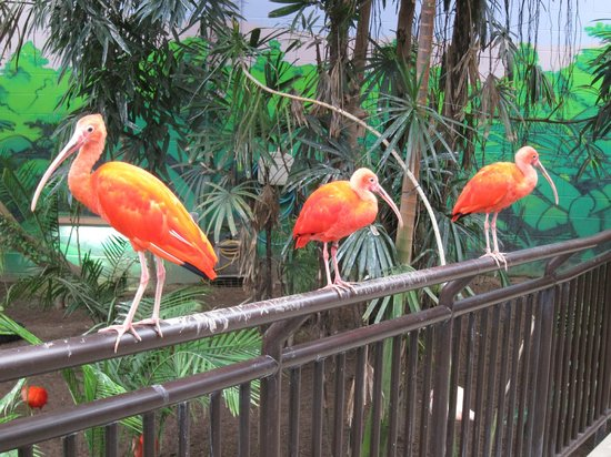 Cape May County Park & Zoo: Residents of the aviary checking out the visitors!