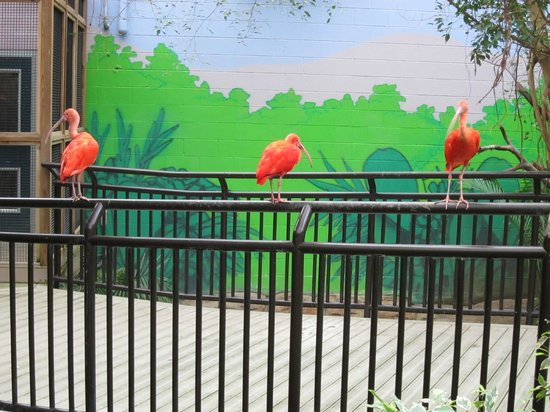 Cape May County Park & Zoo: Another view inside the aviary.