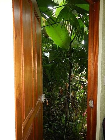 Aparthotel Vista Pacifico : Jungle view from bedroom in Room #8