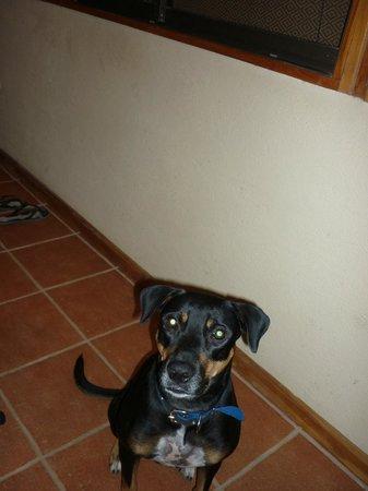 Villas Solar: Luna the resident dog