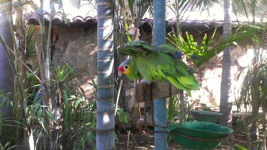 La Floresta Hostel : parrots