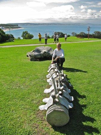 Bartolomeu Dias Museum Complex: Whale bones