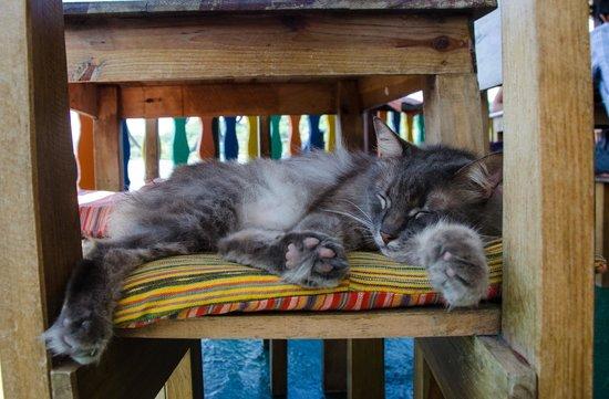 Terrazzo Ristorante & Bar : The resident kitty