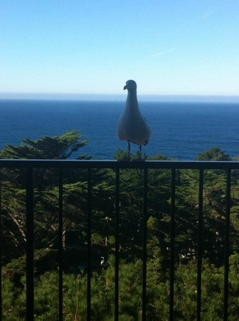 Tickle Pink Inn: Our Seagull Friend (: