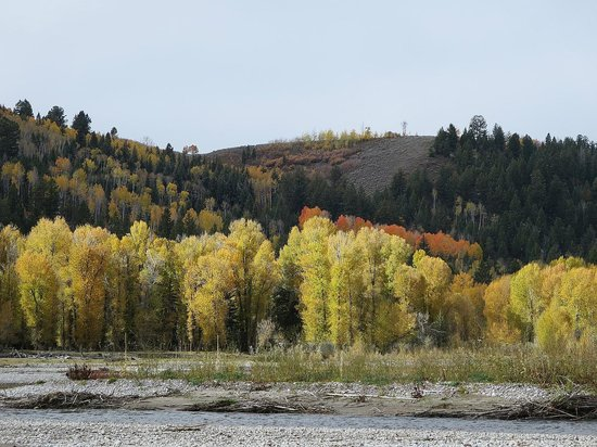 Dave Hansen Whitewater and Scenic River Trips: beautiful foliage on river banks