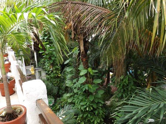 Eco-Hotel El Rey Del Caribe : View from Room