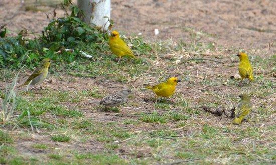 Saint Lucia Estuary: birds