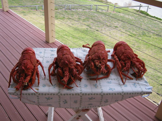 Costa Plenti Southend B&B: Southern Rock Lobster