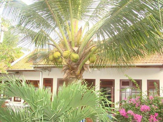 Bon Bien Resort: пальмы на территории отеля