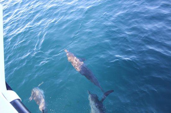 Anantara VeliMaldivesResort: Dolphin trip