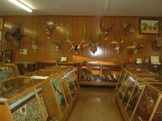 Cottonwood Falls, KS: Roninger Museum - animals and artifacts