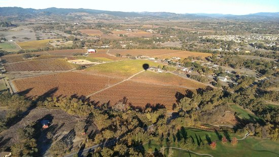 Wine Country Balloons: Shadow over wineries.