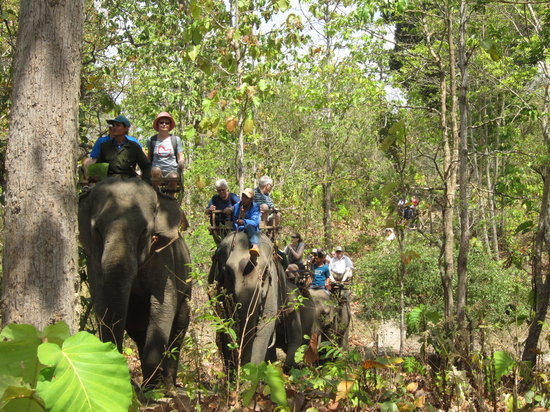 Dak Lak Province, Vietnam: Elephant trecks in nature