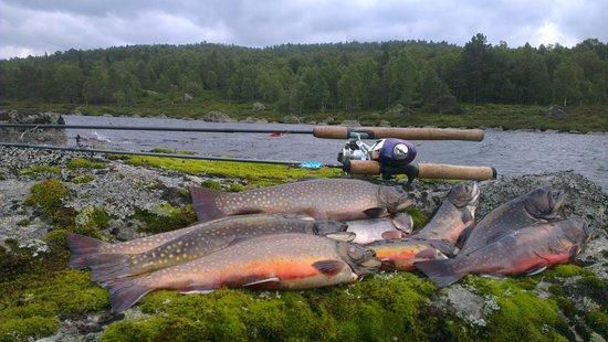 Heddan Gard Guesthouse : Fishing trip