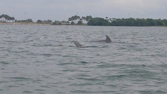 Speed Boat Adventures: Dolphins playing for us
