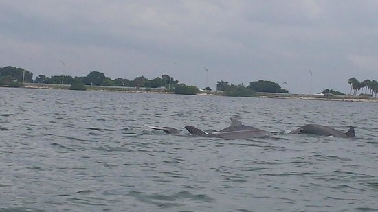Speed Boat Adventures: Dolphin displaying for us