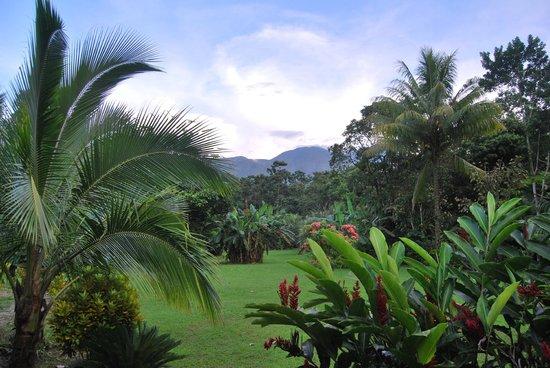 Cataratas Bijagua Lodge: Jardín