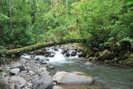 Cataratas Bijagua Lodge: Alrededores