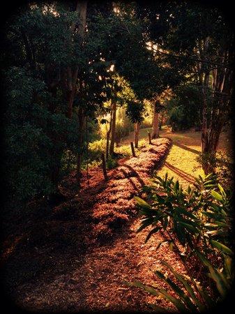 Montville Grove: Gardens
