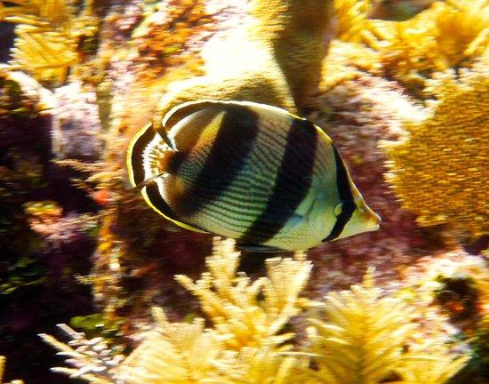 Turquoise Bay Dive & Beach Resort : Unter Wasser