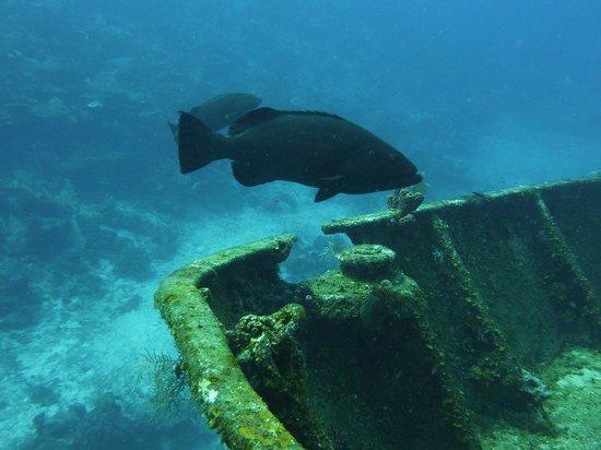 El Aquila Wreck Dive: Wrack
