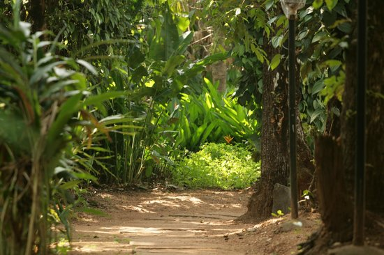 Bananki Homestay: EnRoute to Cottage