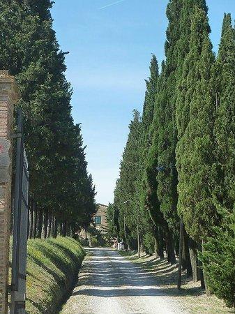 Azienda Agricola il Poggio srl : Auffahrt