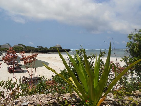 The Sands At Chale Island: beach