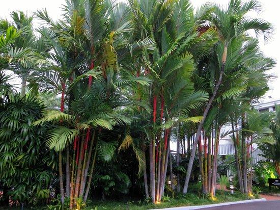 The Hotel Cairns : Palmen